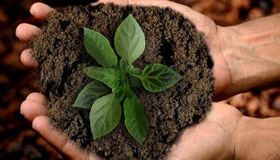 Préserver la vie après la mort: des options écologiques