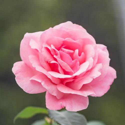 Norah Lobrano's obituary , Passed away on September 25, 2021 in Marrero, Louisiana