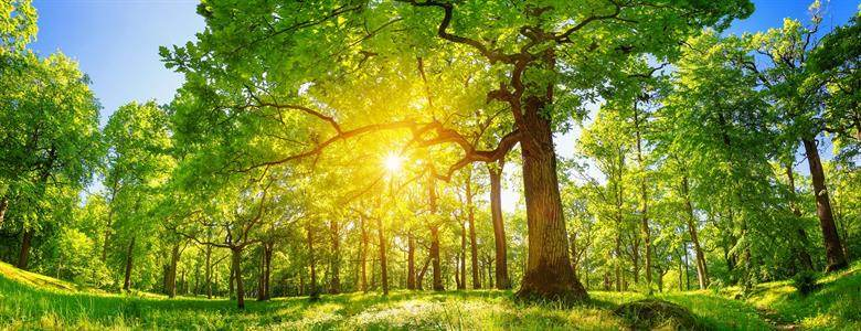 Why plant trees with Echovita ?