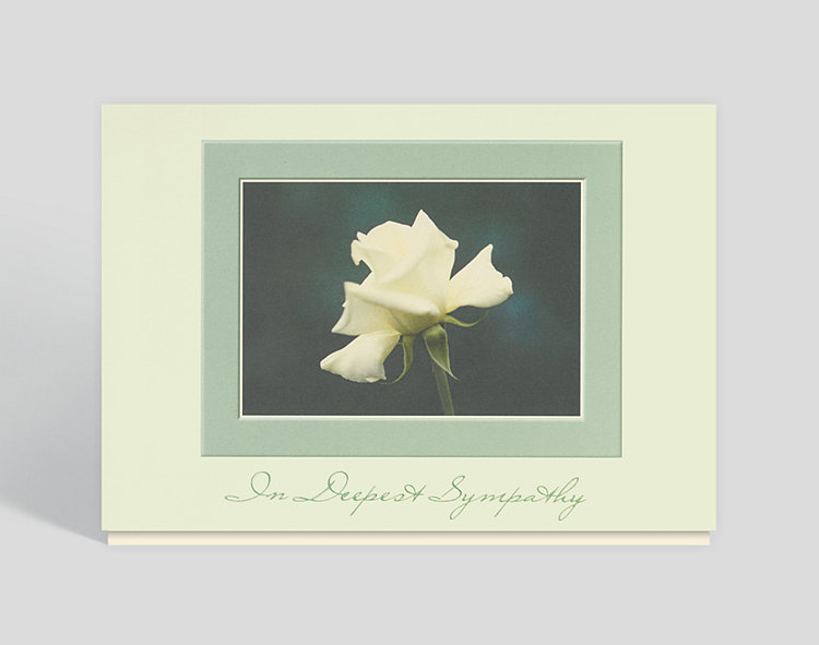 White Rose Sympathy Card - Sympathy Cards